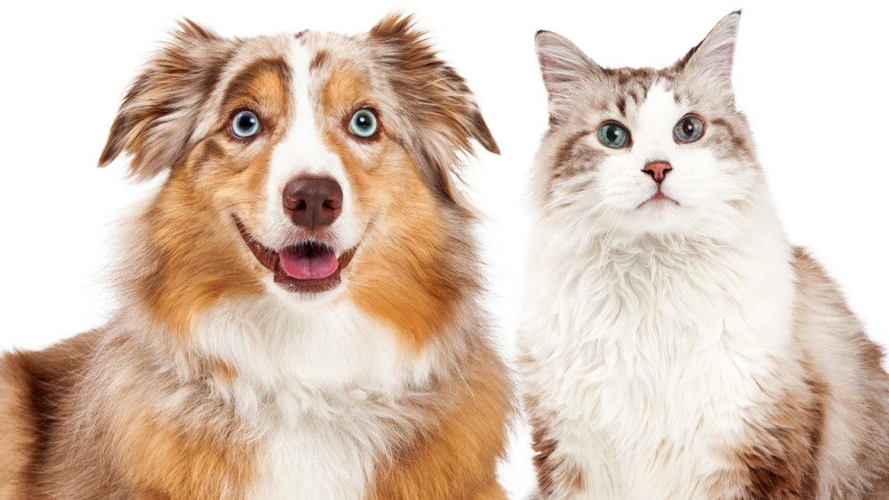 cat and dog with different eye colours
