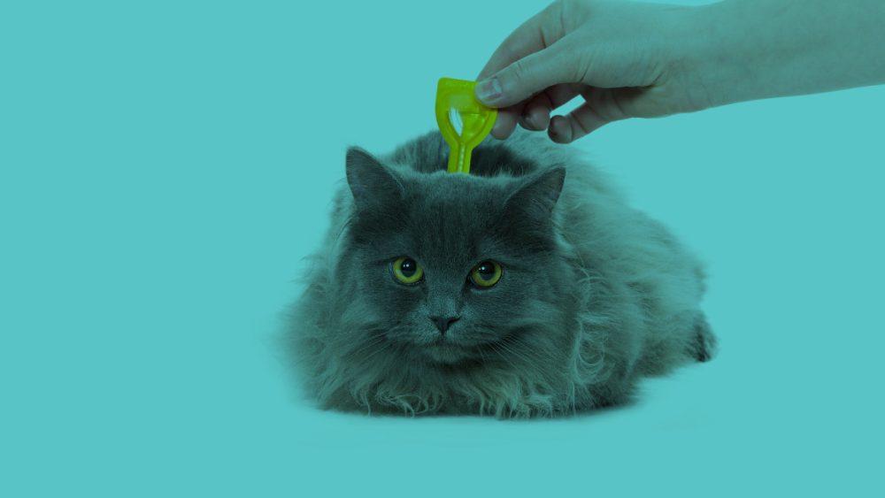 cat getting worm treatment