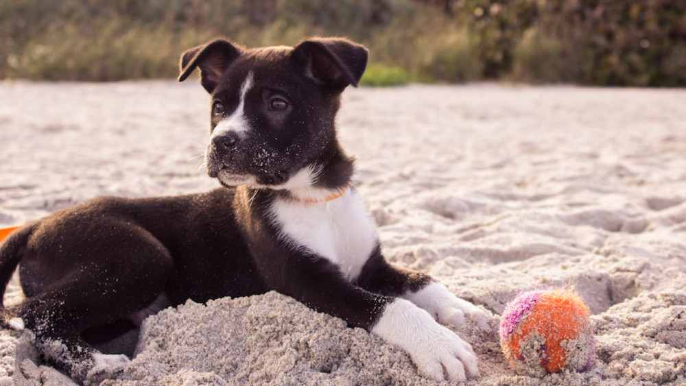 Managing Dogs That Love To Dig! | Vetchat