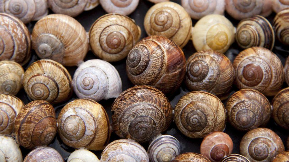 lot's of snails