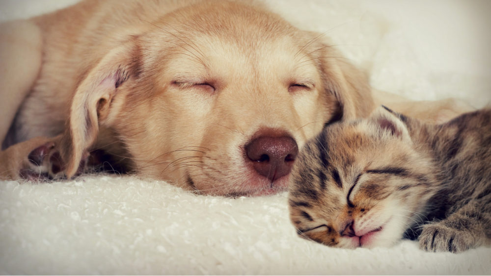 dog and cat being smoochy
