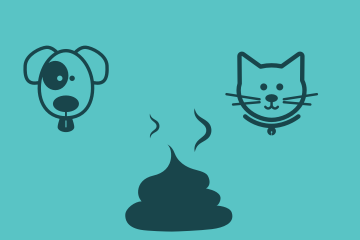 dog and cat eating poo
