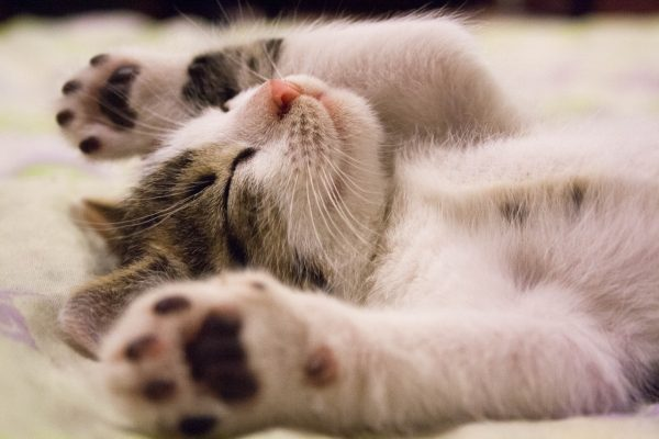 kitten waking up